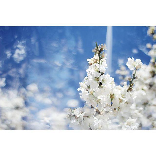 Os presento mi nuevo proyecto Spring dream, espero que os guste.  Cada vez esta mas cerca la primavera. Y prueba de ello es la floración de los almendros. Pasear entre sus ramas es como sumergirse en un sueño de primavera, envueltos aún por el frió del invierno, pero conscientes de que cada vez queda menos para el buen tiempo.  I present my new project Spring dream, I hope you like it.  Each time is closer to spring. The proof of this is the flowering of the almond trees. Walk among its…