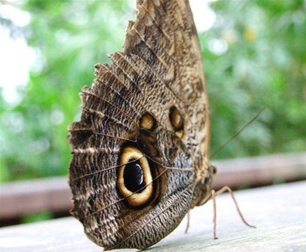 Significado de una mariposa que entra a una casa