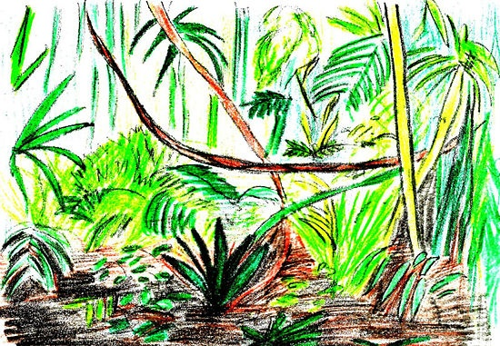 How to Draw a Rainforest Scene: 9 steps (with pictures ...