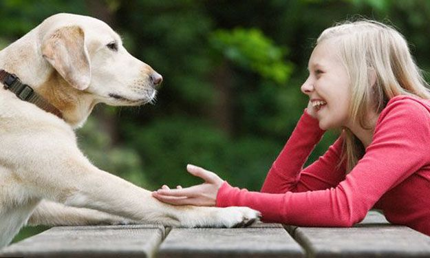 Ground Zero » ANIMAL MAGNETISM: DOGS AND CATS LIVING TOGETHER MASS ...
