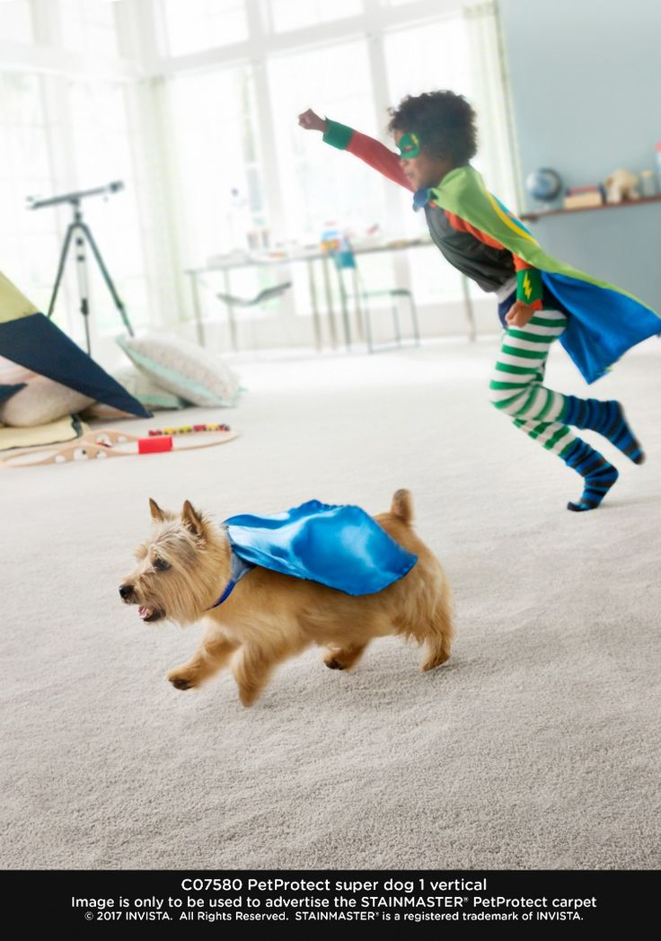 Stainmaster Pet Protect Flooring Stainmaster, Flooring