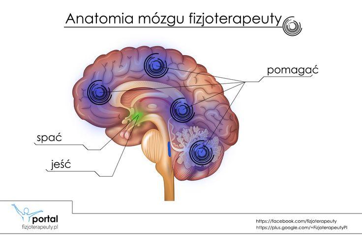 Anatomia mózgu fizjoterapeuty :) http://fizjoterapeuty.pl/ #fizjoterapia #rehabilitacja #anatomia #mózg #humor