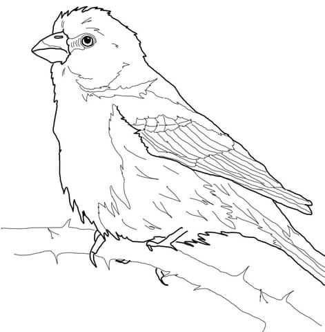 11 best eagle coloring pages images on pinterest eagles for Finch coloring page