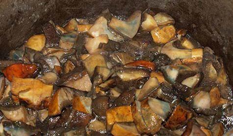 гриб моховик приготовление