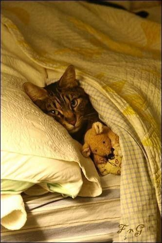 Just a tabby, snuggling with a teddy bear. :) For more cat pictures and to share your own, go to https://www.facebook.com/catloversonly