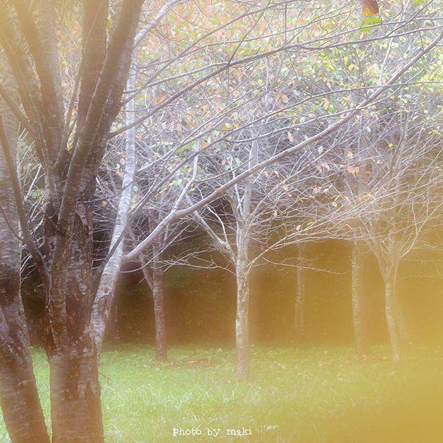 【maki0303xx】さんのInstagramをピンしています。 《* 枯葉と枯葉の間から向こうを覗いてみた☺️🍂🌳🍂 * 木が2本で林 木が3本で森 * …んじゃここは?(´・_・`) 誰か林と森の違いを、区別の仕方を教えてください(´・_・`) * * * 秋が深まり、食欲もモリモリ😋 * 夕食後に日本茶飲みながら、秋田銘菓『さなづら』をチビチビ…。 * さなづらとは山ブドウのゼリーみたいなもので昔からあるお菓子でごぜます🍇 * 最近じゃ、お土産にさなづら買う人は少ないみたいだけどアタシの中で去年からブームでございます。 * 本日もお腹いっぱい胸いっぱい。 * * ごちそうさま。 おやすみなさい…😪 * * * #林#森#秋#能代#秋田#写真好きな人と繋がりたい#nikond5100#instagramjapan#team_jp_ #team_jp_東 #ptk_japan.#wp_japan#nat_archive#natura_love_ #fifty_shades_of_nature…