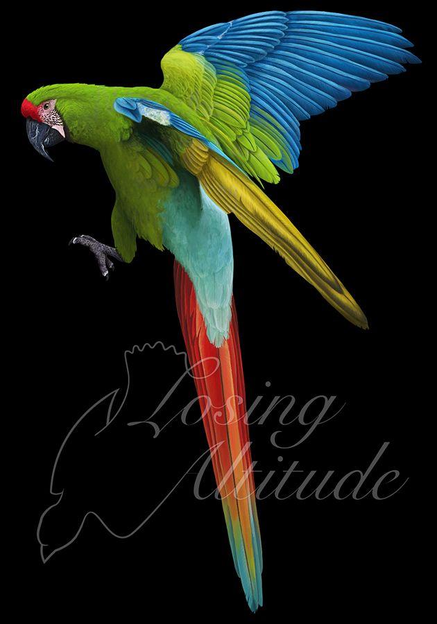 Great green macaw (Ara ambiguus) by namu-the-orca on deviantART - Digital Art