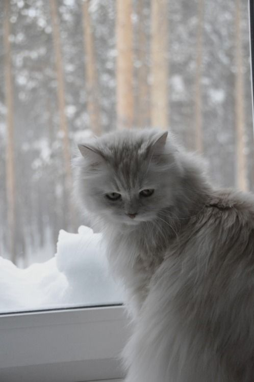 Kitty its cold outside ..