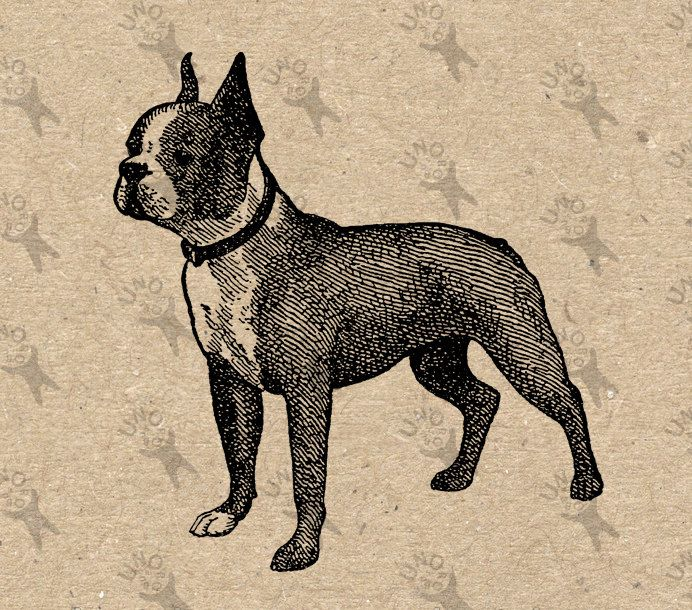 Boston Terrier Dog Image Instant Download Digital printable vintage picture clipart graphic iron on transfer burlap paper wall art HQ300dpi by UnoPrint on Etsy