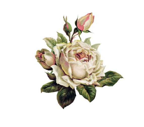 Hey, I found this really awesome Etsy listing at https://www.etsy.com/listing/206083745/vintage-rose-temporary-tattoo-english