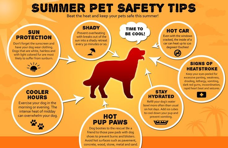 Protect your pets during summer months Don't walk dogs