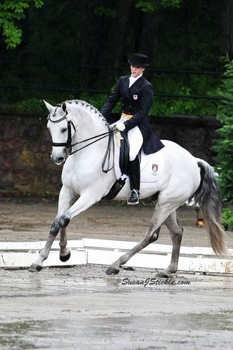 Beautiful dressage partnership