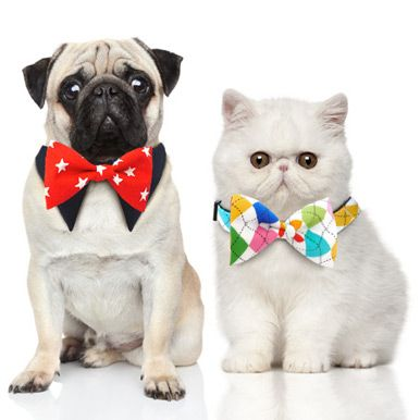 Fashion Collars and Bowties for Your Pet on POP.COM.AU #popaustralia #cute #petcollars