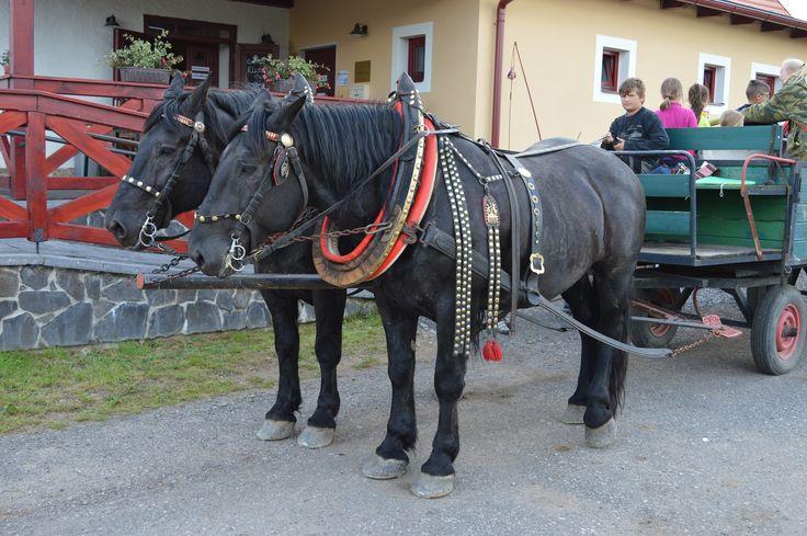 Koníci vozící naše milé návštěvníky