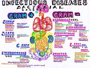 Infectious bacterial diseases and where to find them
