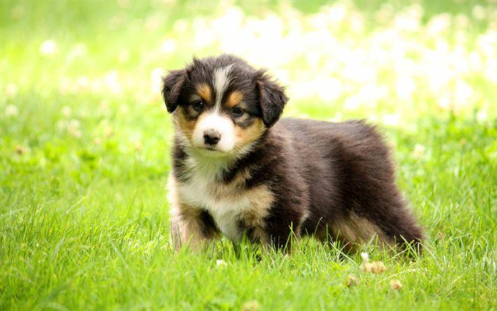 Fondos De Pantalla De Animales Graciosos: Más De 25 Ideas Increíbles Sobre Fondos De Pantalla
