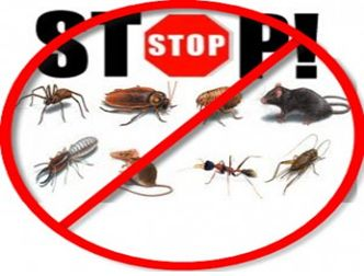 Bed bugs are blood feeders and are most active at night or in the early hours before dawn, but if starved for some time they may be active during the day.  thirstypestcontrol.com.au