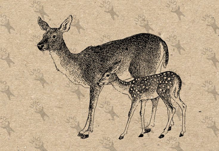 Antique image Deer Fawn Instant Download Digital printable clipart graphic Burlap Fabric Transfer Iron On Pillows Totes Tea Towels HQ300dpi by UnoPrint on Etsy