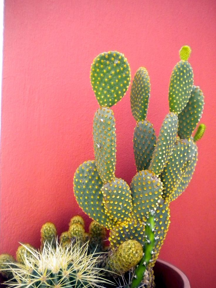There is probably nothing that describes 'Life' better than this... beautiful and yet thorns all the way: Succulent, Color, Green, Coral Wall, Pink Wall, Garden, Flower, Cactus