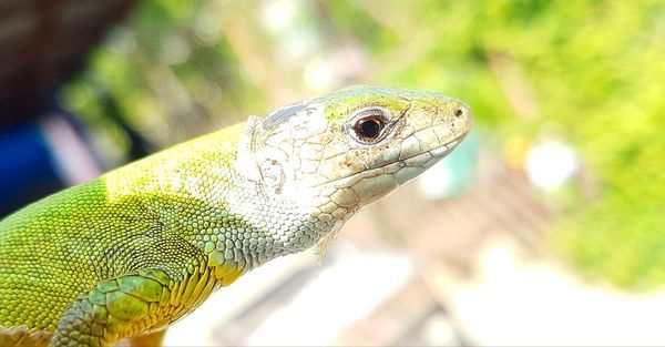 One Animal Animal Wildlife Close-up Reptile Day Focus On Foreground Green Color Animal Themes Animals In The Wild Portrait No People Nature Beauty In Nature First Eyeem Photo Lizard Little EyeEmNewHere
