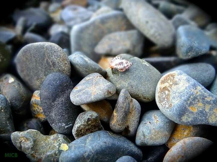Caracol FOTOGRAFÍA MICB