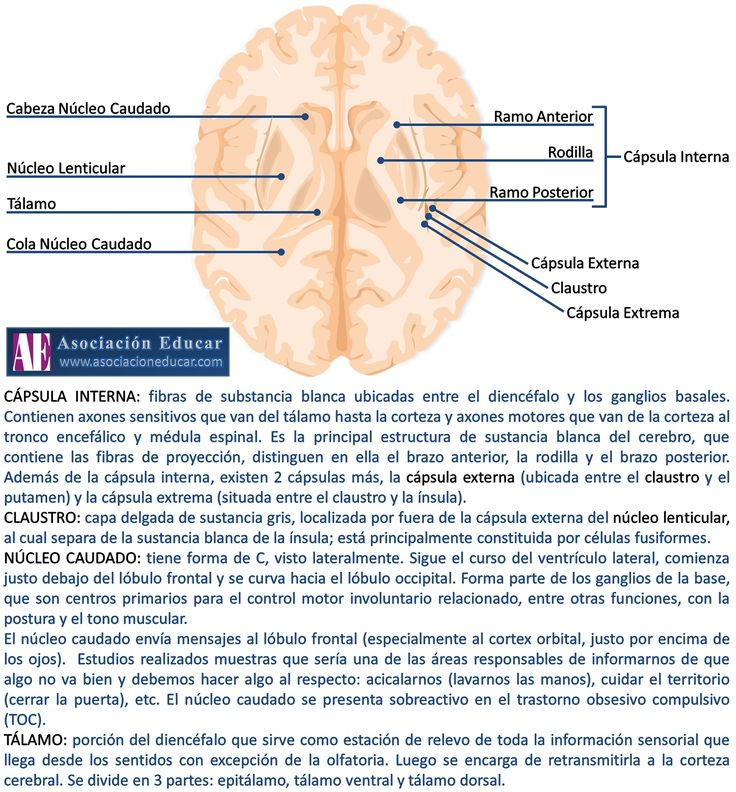 Ilustración de uso libre, sólo se pide citar la fuente (Asociación Educar).