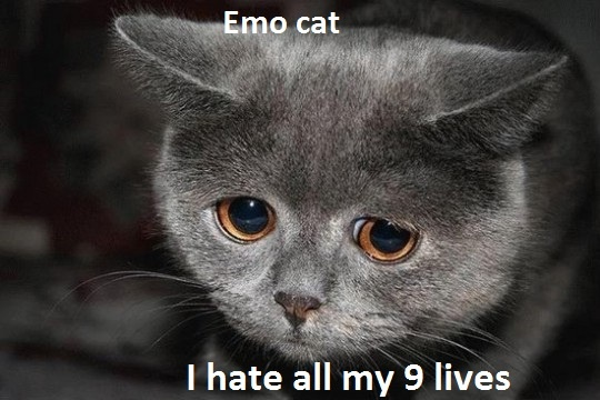 emo kitty