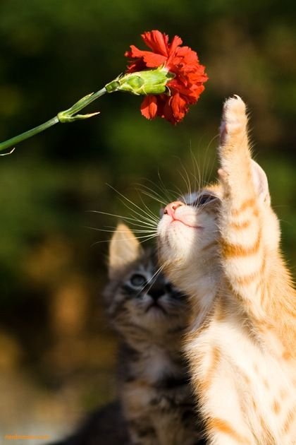 Kitty play with flowers.