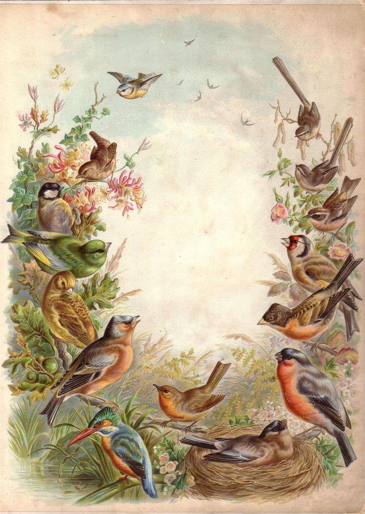 Старые картинки птиц