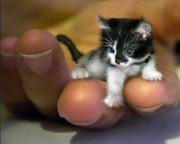 Best Kittens Cutest Ideas On Pinterest Kittens Cutest Baby - 25 of the fluffiest cats ever