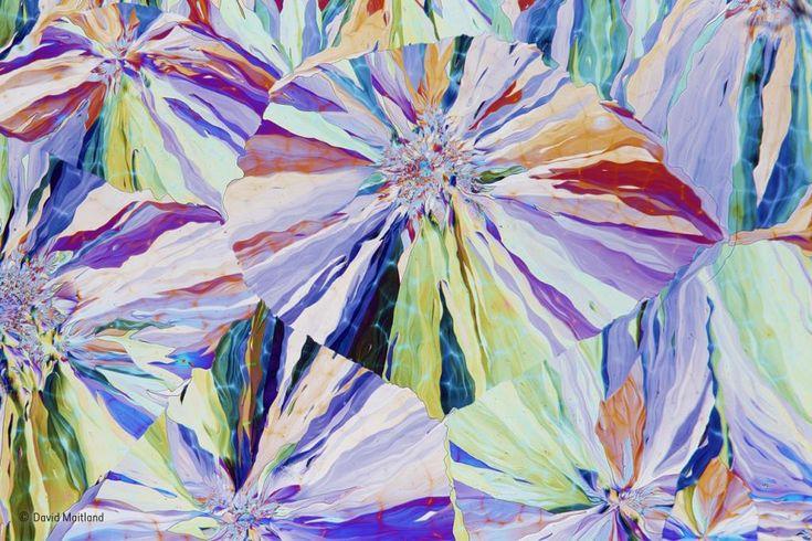 """Kristallisiertes Salicin. © David Maitland, Großbritannien: """"Willow Up Close"""""""