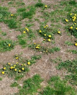 Comment se débarrasser des mauvaises herbes naturellement ? - Actualités météo - Météocity