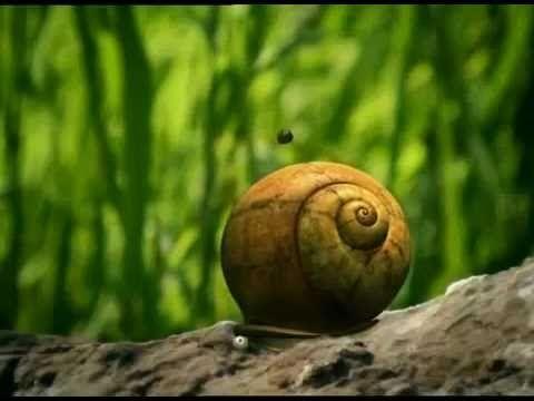 Great Animation - Hyperaktiver Marienkäfer - YouTube
