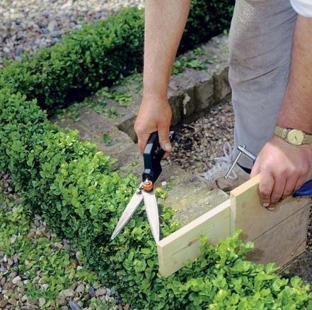 Rez a tvarovanie drevín patria medzi najnáročnejšie práce v záhrade. Vyžaduje si množstvo skúseností aj vedomostí. Poradíme vám, ako a kde začať.