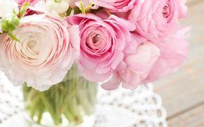 Обои цветы, розовые, лютики, букет
