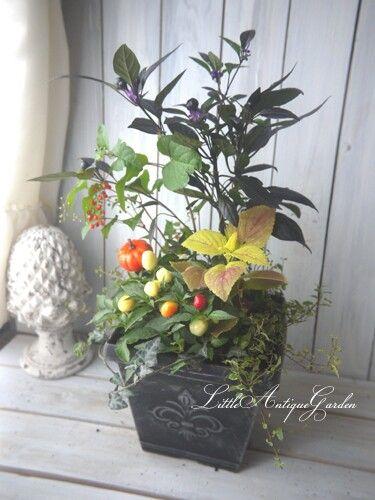 HappyHelloWeen(*´∇`*) #シャビー#アンティーク#寄せ植え#シック#antique#garden#shabby