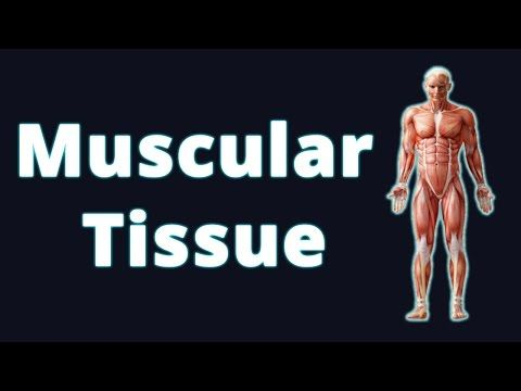 Muscular Tissue & Its Three  Types Of Muscles |Animal Tissue |  Biology | Science | Letstute - YouTube