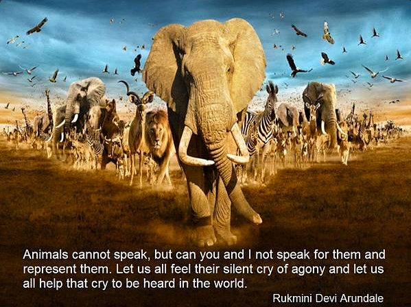 Elephant Good Luck Quote: 13 Best Inspiring Animal Quotes Images On Pinterest