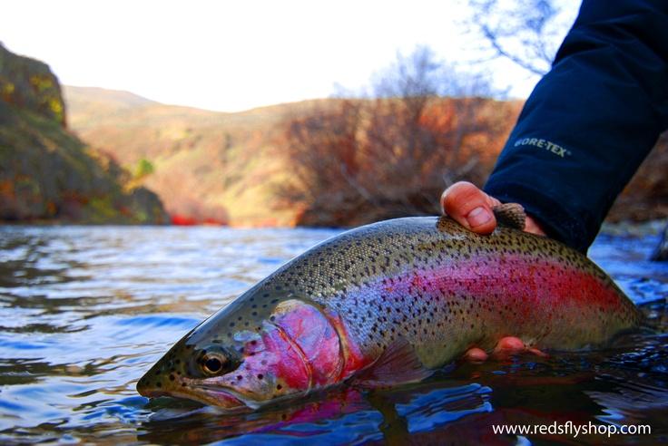 7 best images about yakima river washington on pinterest for Washington state fish