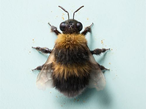 ahhmmmburr: eleventheleven: Bumble Bee such perfection - G R I M E S