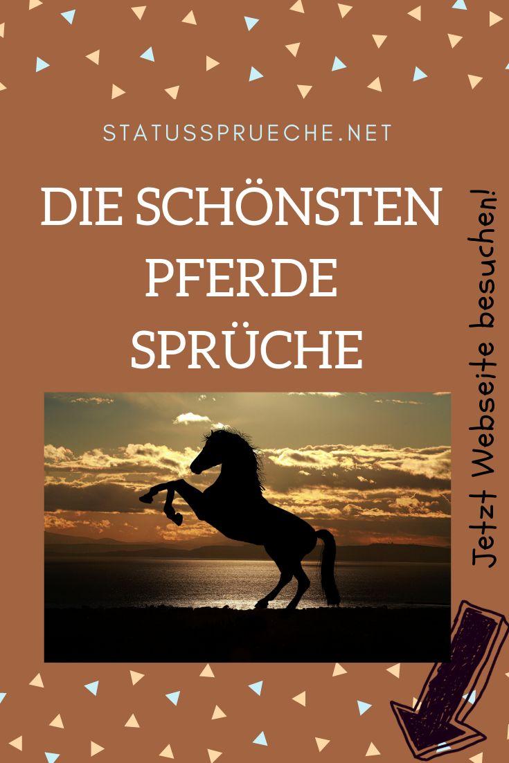 Die schönsten Pferde Sprüche | Schöne pferde, Pferde