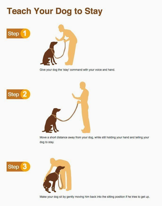 Dog Training Facts Click The Picture For Lots Of Dog Obedience