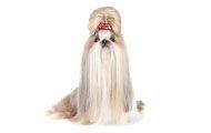 Curso de Peluquería Canina: Especialización de Raza #cursospeluqueriacanina