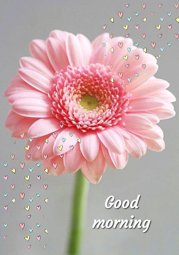 Saraseraragmail Com Buon Giorno Gm Good Morning Quotes Good