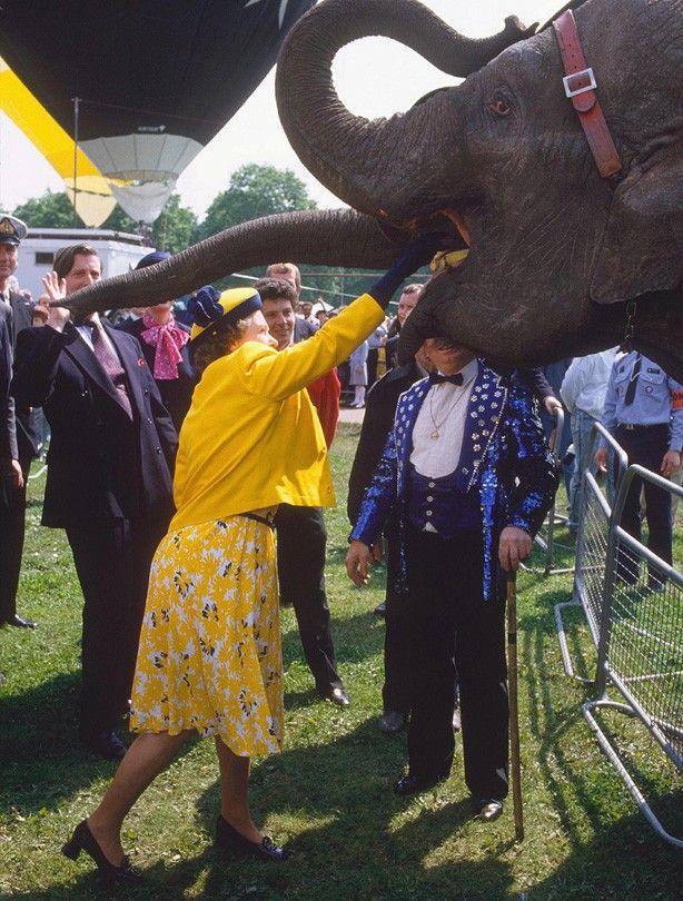 Queen of the elephants 3