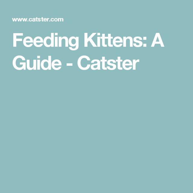 Feeding Kittens: A Guide - Catster