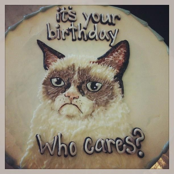 Best Grumpy Cat Birthday Ideas On Pinterest Grumpy Cat Movie - This cat eating a birthday cake is everything you need in life