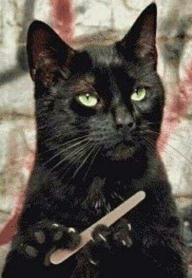 золотистой гифка с котом который ногти пилить мужчины