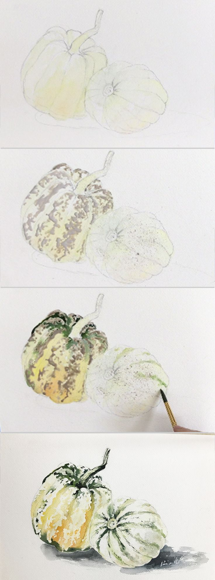 Stages of painting Realistic Squash in Watercolor