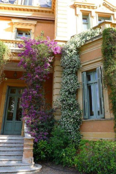 Fachadas De Casas Con Enredaderas Y Jazmines Enredaderas Casas Jardines